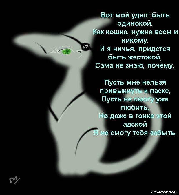 Статус про любовь к кошке